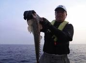 7月12日 テンヤ真鯛リレー 午後船 釣果