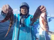 2月4日 メバル船・フグ船 釣果