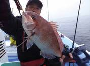 3月23日 ヤリイカ船・テンヤ船 釣果