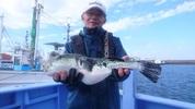 1月3日 ショウサイフグ船 釣果