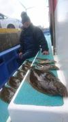 1月29日 ヒラメ船 釣果