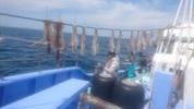 5月4日 ヤリイカ船 釣果