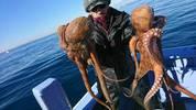 12月29日 フグ船 釣果